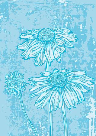 marguerite: flower marguerite on grunge background