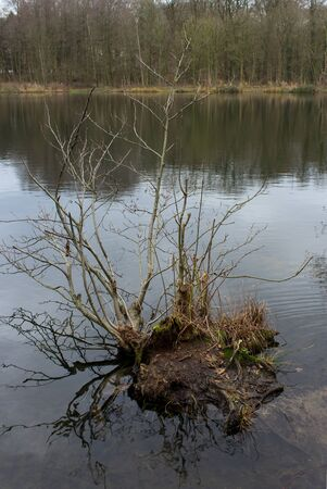 mere: shrub in water, autumn landscape on the lake Stock Photo