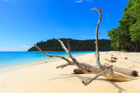 expansive: Koh Rok (Rok Island) the island of Mu Ko Lanta National Park can go to by Speedboat from Phuket. Brilliant white-sand beaches, crystal-clear water, expansive coral reefs.