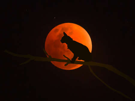 Black cat on the full moon