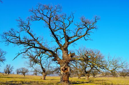 sky brunch: This is a picture of big old tree