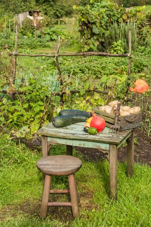 Still life with various vegetables outdoor in the sun