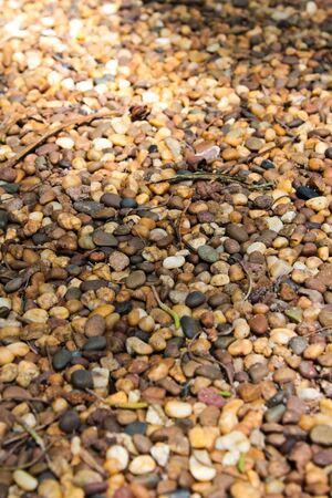 rock in the garden