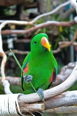 a green parrot looking at the camera