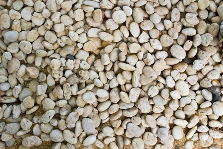 white pebbles in the garden Stock Photo - 12988598
