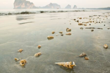 shell on the beach Stock Photo - 12988712