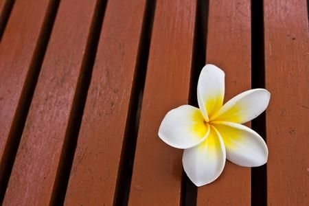a plumeria flower on the wood floor