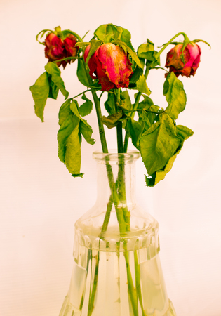 bouquet of dried roses in glass vase photo