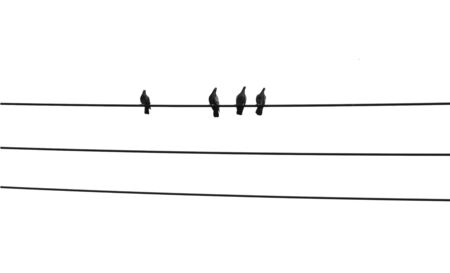 birds on a wire: birds on wire with blue sky background Stock Photo