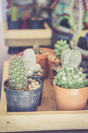 various cactus plant in the pot in warm retro filter Stock Photo
