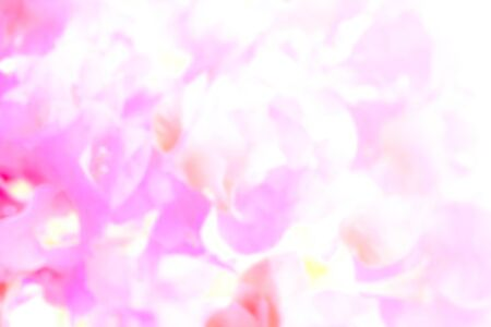abstract blur photo of pink flower