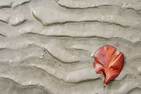 dried leaf: dried leaf on wet sand at the beach Stock Photo