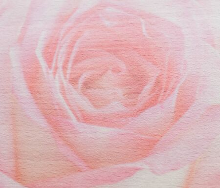 beautiful rose: double exposure of pink rose and wood background