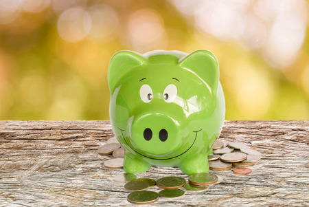 wooden insert: piggy bank with coins on nature bokeh background