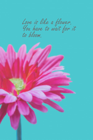 Love Quotes On Pink Gerbera Flower Background Stock Photo Picture Custom Flower Love Quotes