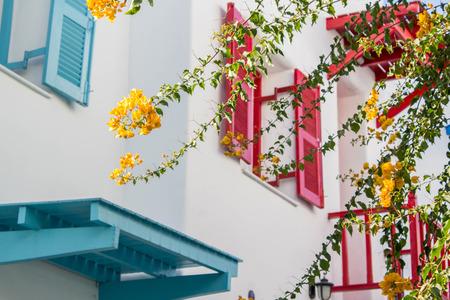 color bougainvillea: orange bougainvillea, paper flowers on background of color window de focused