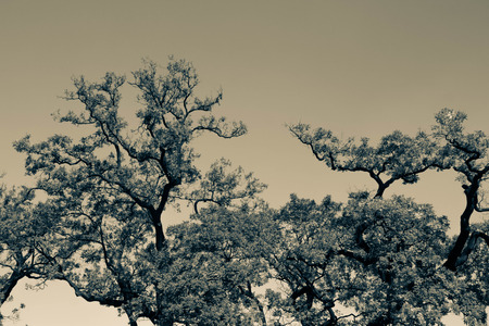 silhouette of big tree in color filter Stock Photo