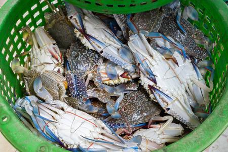 Flower crab, Blue crab, Blue swimmer crab, Blue manna crab, Sand crab (Portunus pelagicus) in basket at local market