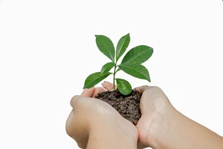 small world: hands holding green young plant : concept of earth day or ecology