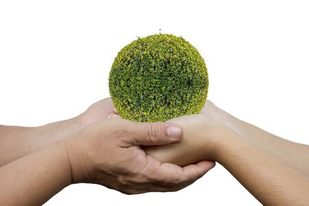 small world: daughter  hands in dad hands holding green young plant isolated on white background : concept of earth day or ecology Stock Photo