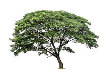 big tree isolated on white background Stock Photo