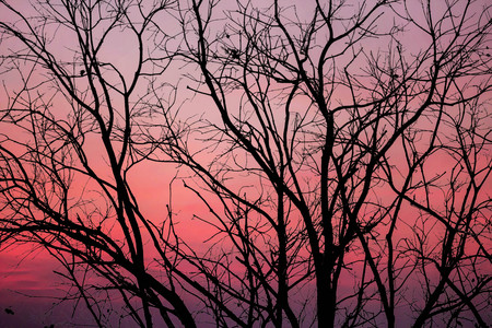 silhouette of black tree isolated on sunset background
