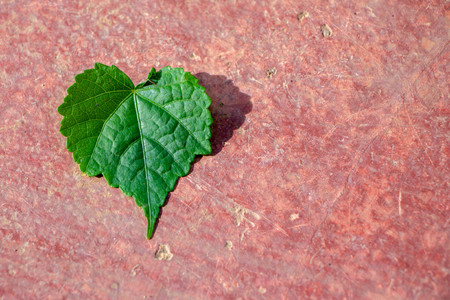 green heart leaf on red cement background