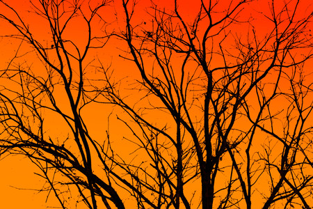 silhouette of black tree isolated on orange background 写真素材