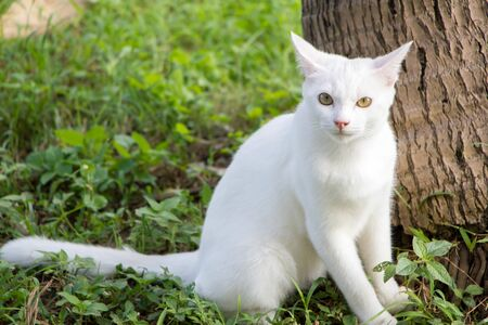 white cute cat sitting under the coconut tree and looking at camera