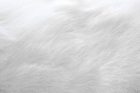 abstract background of white cat fur 写真素材