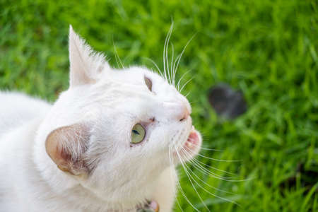 white cute cat talking on green grasses background 写真素材