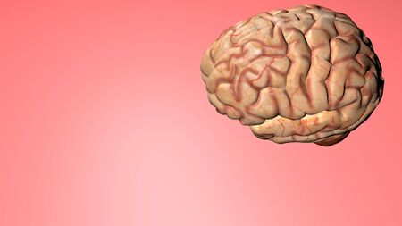 Human brain isolated on a colored background  Anatomical 3D model
