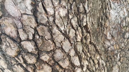 close up view of tree peel: Macro close up texture for background and texture.  Tree bark texture. 写真素材