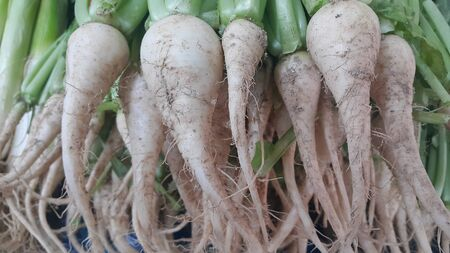 White radish roots with green leaves placed in market for sale 写真素材