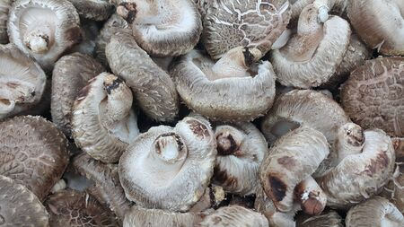 Closeup view of big pile of fresh harvested mushrooms. Food background of mushrooms in market for sale. A Vegetables background 写真素材