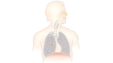 info-graphic illustration of lungs on white background with copy space for text. Lungs are part of human chest and is used for breathing purpose