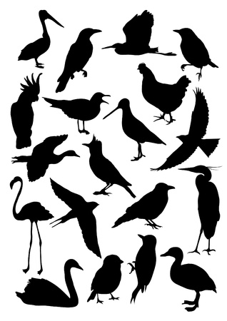 Black silhouettes of various birds Vector