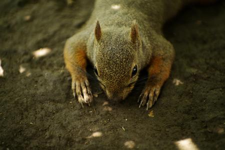 Squirre Standard-Bild - 109033971