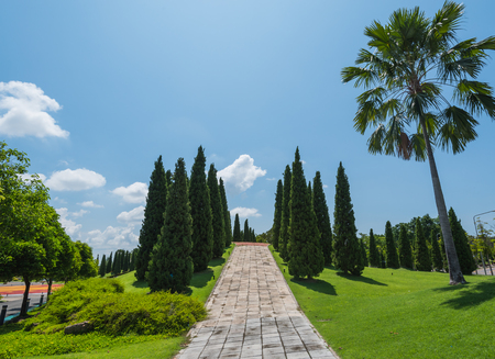 surface view: Beautiful pines in royal flora garden, Chiangmai Stock Photo