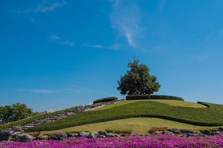the royal park: Tree on hill in Royal Park Rajapruek