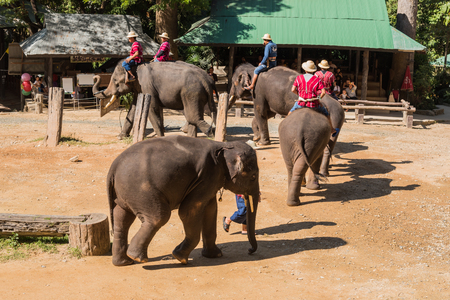 beck: CHIANGMAI THAILAND 03 DEC 15 elephant Showing at The young Elephant school on 03 December, 2015 in Chiangmai, THAILAND Editorial
