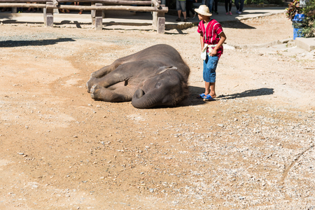 spacial: CHIANGMAI THAILAND 03 DEC 15 elephant Showing at The young Elephant school on 03 December, 2015 in Chiangmai, THAILAND Editorial