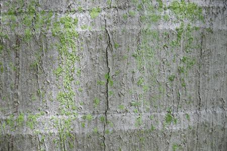 Coconut tree trunk texture backgroun Stok Fotoğraf
