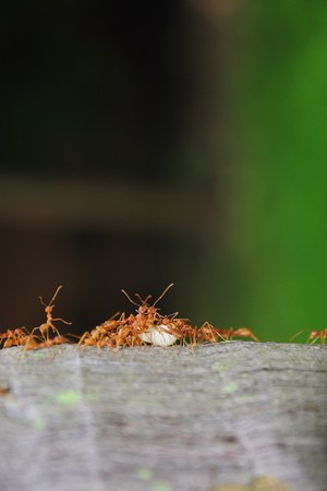 Ants on trunk and their larvae