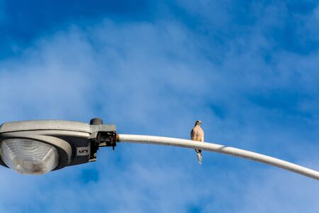 Lonely bird warming an electric power line.
