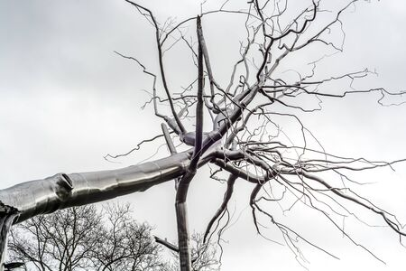 neighboring: Monument to a broken tree that is made of a metal. Coexists with the natural trees , reminder. Editorial