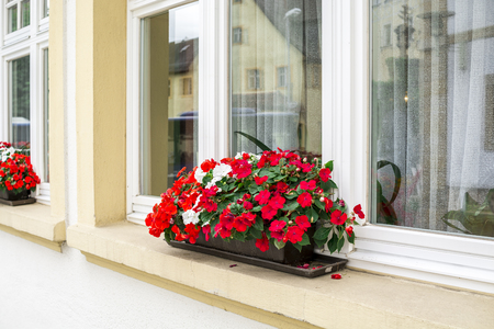 Red flowers on window outside the house with reflections - in summer