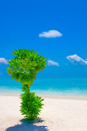 Sandy beach in Maldives 스톡 콘텐츠
