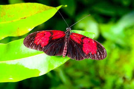 Beautiful butterflies Stock Photo