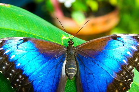 Beautiful butterflies Standard-Bild